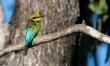 Birdwatching & Wildlife Spotting Tours