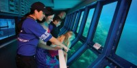 Great Adventures - Pontoon Underwater Observatory