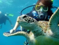 scuba dive with turtle