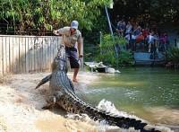 Hartleys Crocodile Adventures - Half Day Package
