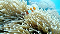 reef trip