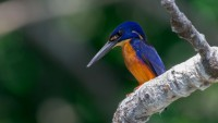 Bird Watching Tour Cairns