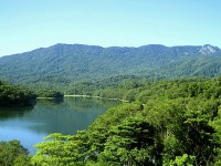 Discovery Tours Half Day 4WD Rainforest and Waterfall Tours cairns
