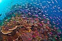 Mike Ball - Spoilsport - 3 Night Cod Hole & Ribbon Reefs