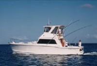 Billfish - Light Tackle Fishing