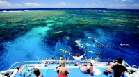Calypso Dive and Snorkel Port Douglas Outer Reef Tour