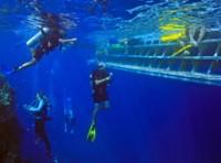 Calypso Dive and Snorkel Port Douglas Outer Reef Tour